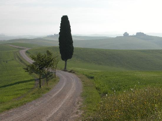 Tenuta di Corsano: Great morning walks