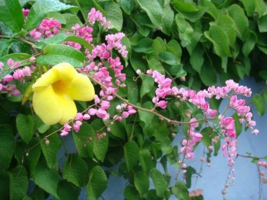 Hamilton, Islas Bermudas: A pretty flower