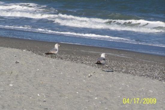 Myrtle Beach April 2009