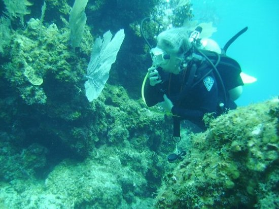 Anchor Wall: Renee Cayman Brac