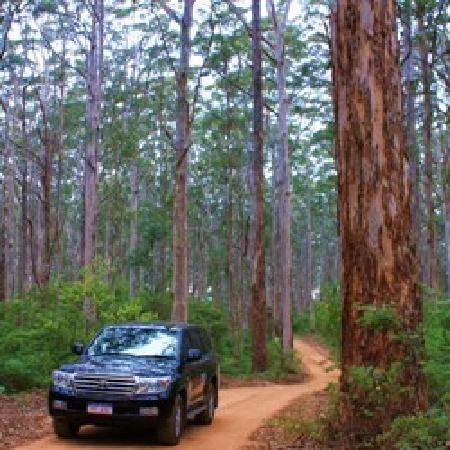 Top Drop Tours Margaret River : Deep in the Boranup Karri Forest
