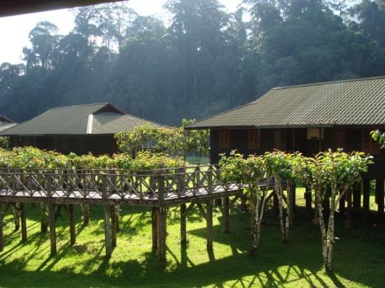 Sepilok, Malaysia: Borneo Rain Forest Lodge Dunum Valley, Borneo