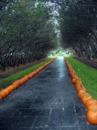 Arboreto y Jardín Botánico de Dallas: 1607P Saturday, October 03, 2009 ♥