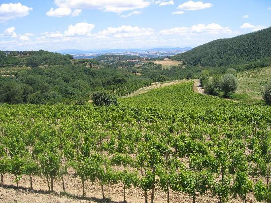 Agriturismo Il Serraglio: Weinberge rings um die Häuser und Wohnungen