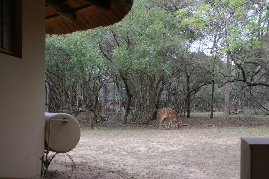 Bonamanzi Game Reserve: Great location