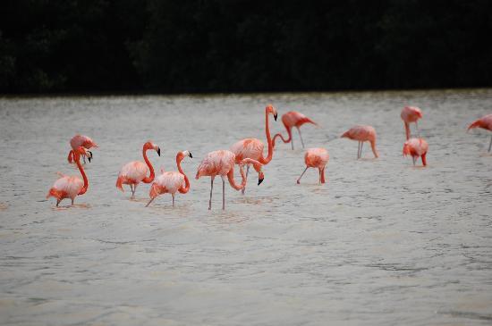 Casa de las Columnas: Flamingos at Celestún