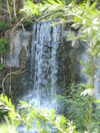 Taino Beach: Beautiful waterfall at the Garden of the Groves