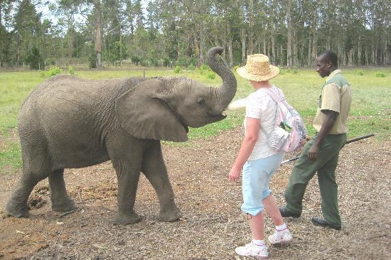 Knysna Elephant Park: Junior taking her bottle
