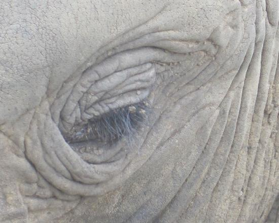 Knysna Elephant Park: Eye to eye with an elephant