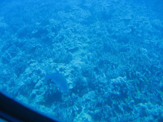 Atlantis Submarines Kona: Oh, look, more blue
