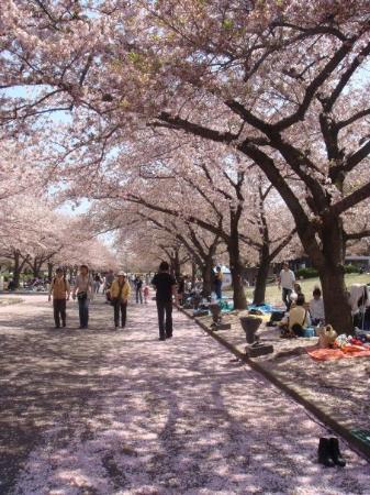Osaka, Japan: wowowowowowowowo! I love it <3