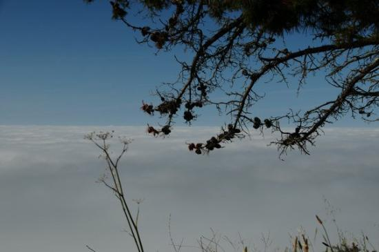 Cambria, CA: The fog was hanging right on the coast making for some very nice pictures.