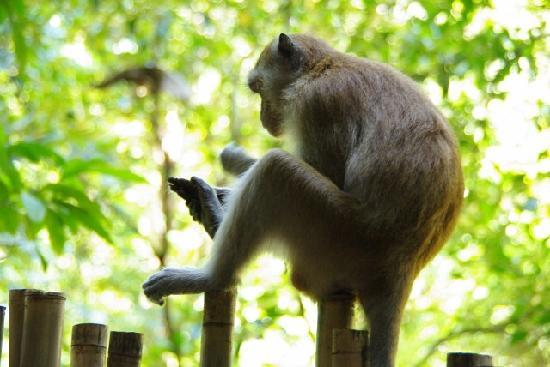 Phra Nang Beach: monkey on the way