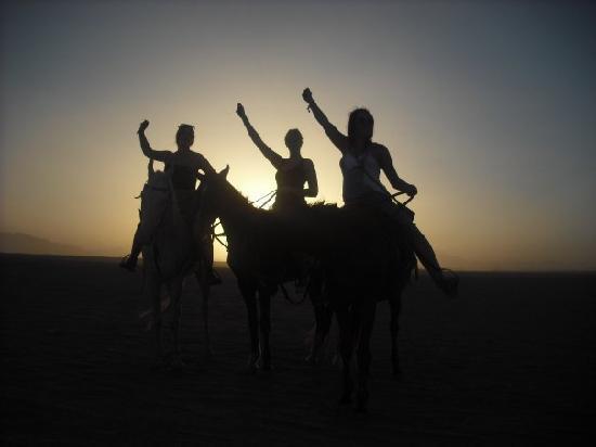 Harmony Makadi Bay Hotel & Resort: horse rinding for sunset in the desert