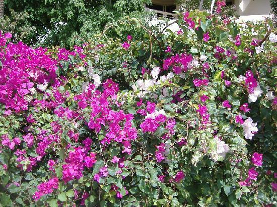 Sindbad Club: quelques fleurs