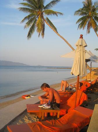 Mimosa Resort & Spa: Cool Sun Bed Position!!