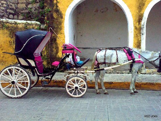 Hacienda Hotel Santo Domingo: horse buggy in Izamal