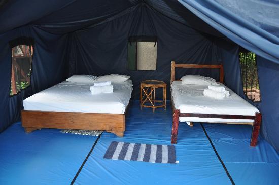 Pura Vista Corcovado Ecocamp: View of a tent