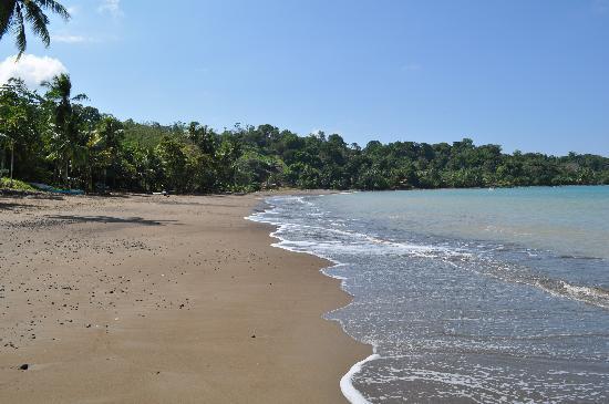 Pura Vista Corcovado Ecocamp: Agujitas Beach (15 minute walk)