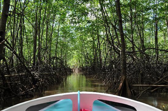 Pura Vista Corcovado Ecocamp: Mangroves