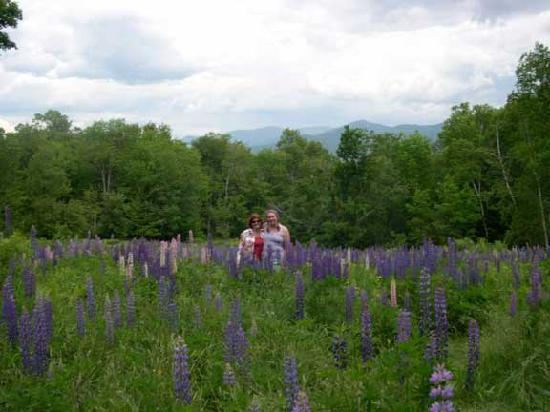 Sculptured Rocks Farm Country Inn: Join us motorcycle week for our annual lupine ride
