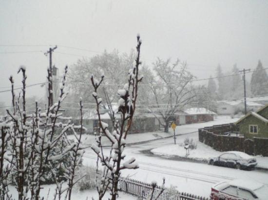 a rare snowfall from outside our window in Eugene