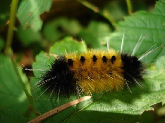 North Vancouver, Canadá: This little Fuzzy Guy . . . .