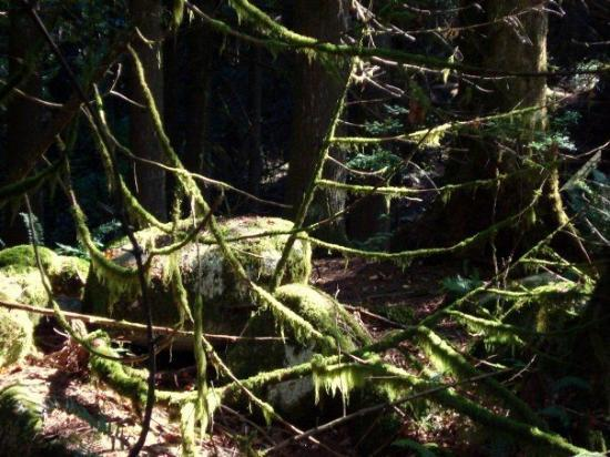 North Vancouver, Kanada: Many places have hanging moss.