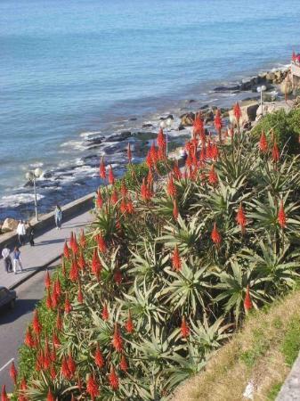 مار ديل بلاتا, الأرجنتين: Coniferas