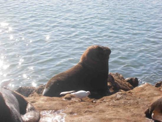 Mar del Plata, Argentina: Que olor!!!