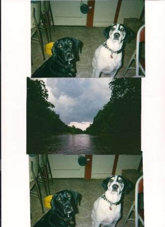 TOO ALL WHO REMEMBER 4TH OF JULY AT HARVEY'S PLACE IN TRUXTON  FROM THE DOGS TOO THE RIVER TRIP.