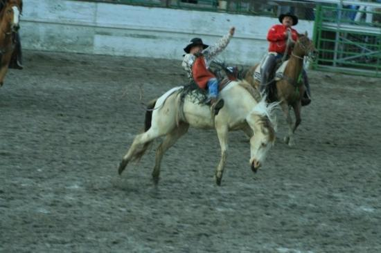 Jackson (WY) United States  city photo : Jackson, WY, United States 4th of July Rodeo Picture of Jackson ...