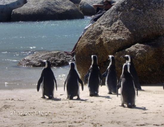 Boulders Beach Photo