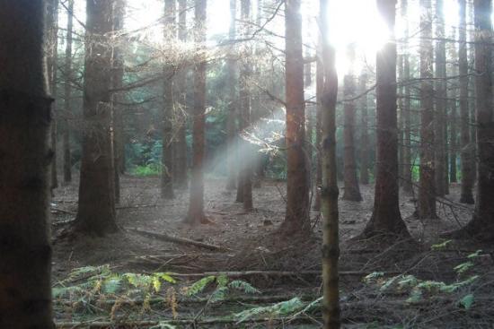 Bastogne, Belgique : Inside the Bois Jacques woods outside Foy.
