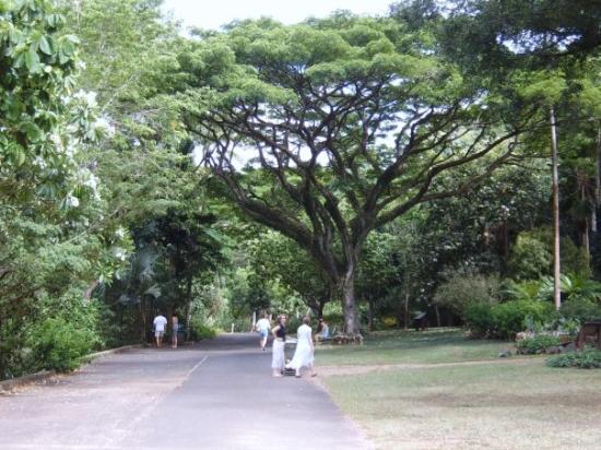 Waimea Arboretum And Botanical Garden: My Mom And I Walking To The Falls  (waimea
