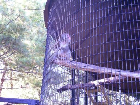 Mill Mountain Zoo : A monkey.
