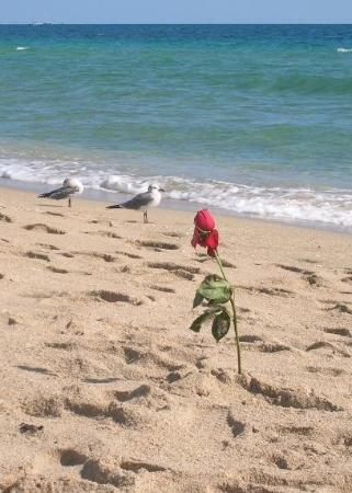Fort Lauderdale Beach: Someone must have had and early morning date... (2009)