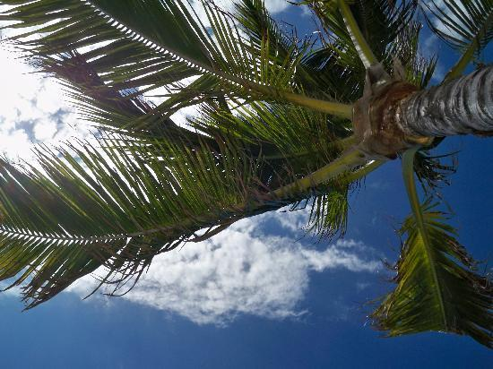 Hotel Cozumel and Resort: View from my beach chair