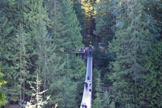Capilano Suspension Bridge und Park Foto