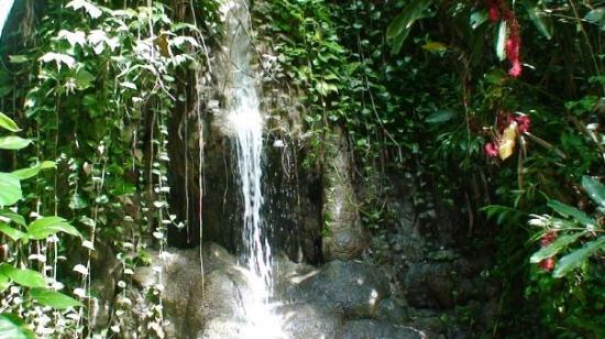 Somerset Falls Bild