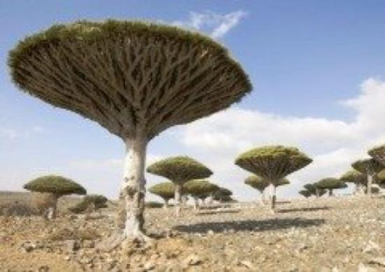 Tanger, Marokko: I wonder if these trees would grow in farmville, lol