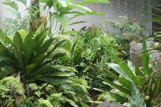 Río Grande, Puerto Rico: Plants at El POrtal El Yunque