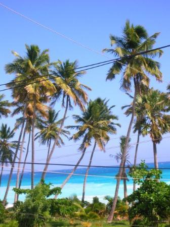 Barahona, Dominican Republic: The view out my bedroom window
