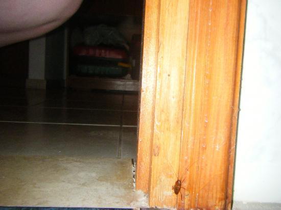 Danelis Apartments: Our not so nice little friend