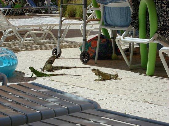 Stellaris Casino : Iguana's...it's so crazy