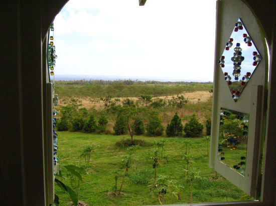 Pahoa, Havai: view from the upstairs alcove of the avocado tree house