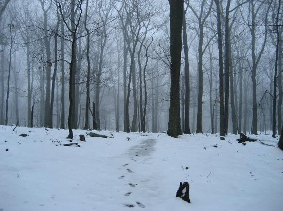 Cacapon Resort State Park: A snowy trail