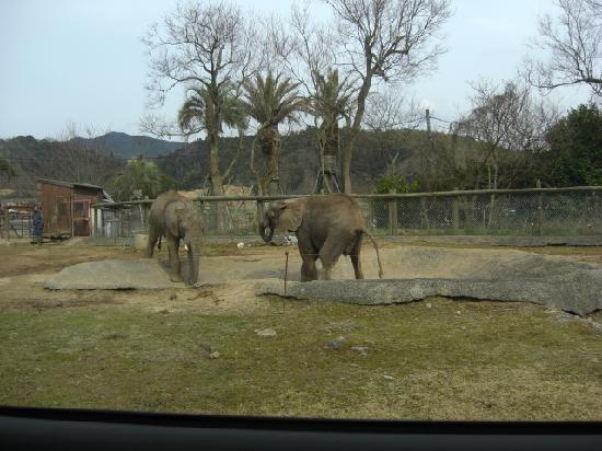 Akiyoshidai Safari Land: 車の中から