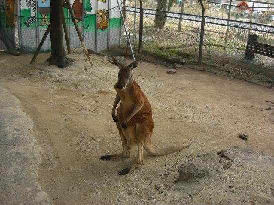 Akiyoshidai Safari Land: 可愛いね