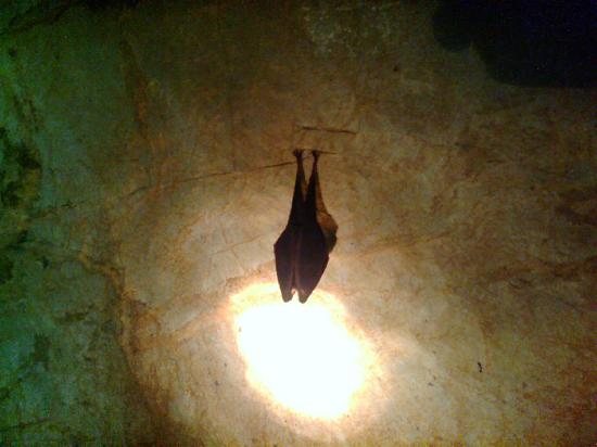 Furen Limestone Cavern: 鍾乳洞の住人